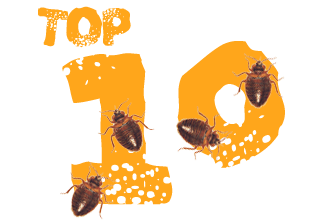 10 Bed Bug Protection Tools